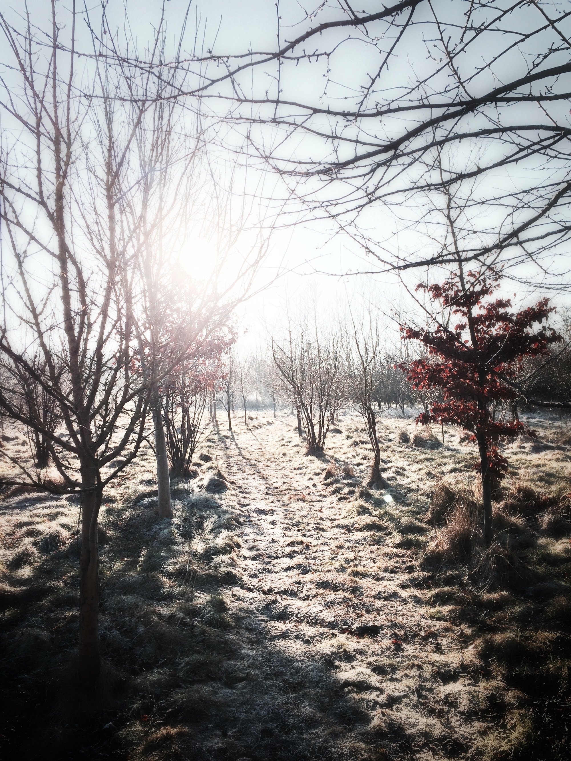 Overcoming Grief on Christmas