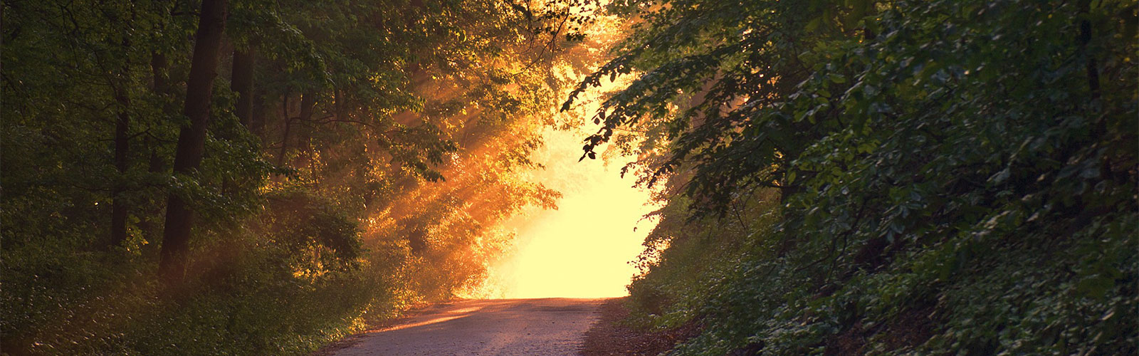 Discernment: Are You On The Right Path?