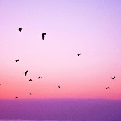 soaring1